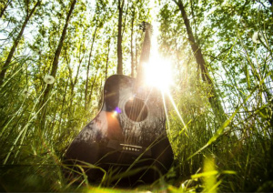 ギターとワシントン条約の深い関係性